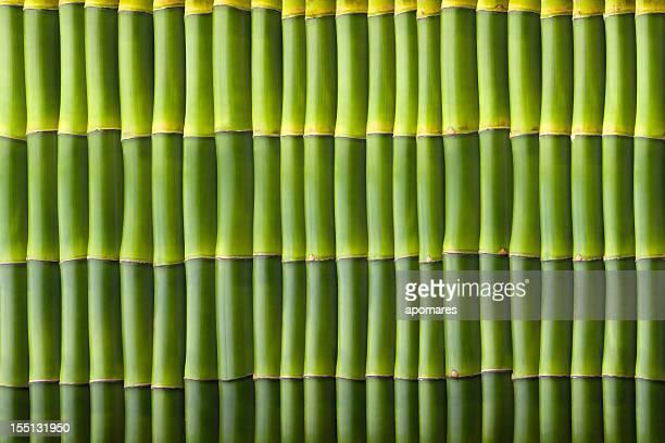 Natural de bambúes patrón sin costuras de pared