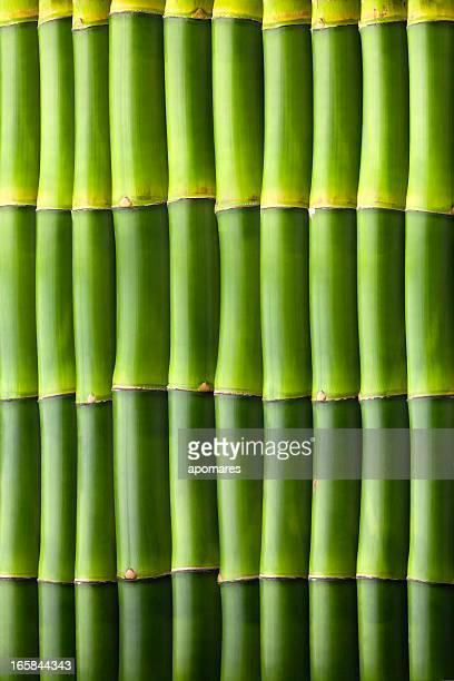 Muster mit natürlichem Bambus nahtlose Wand
