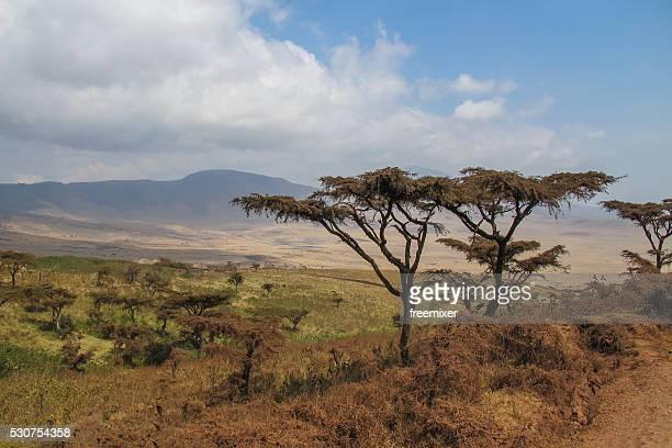 """La beauté naturelle de l """" Afrique"""