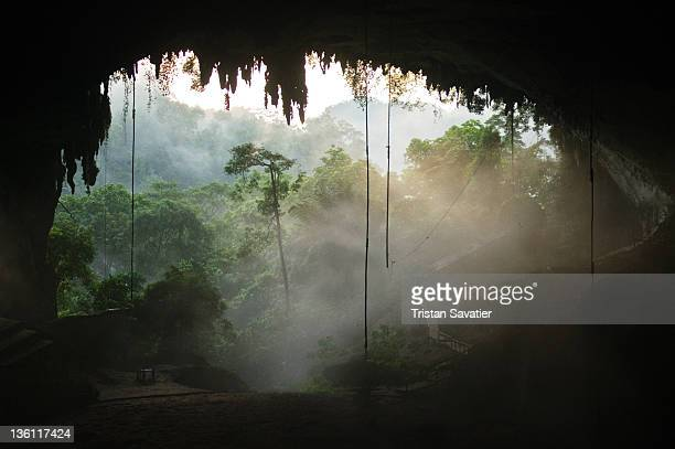Natural cave in rain forest