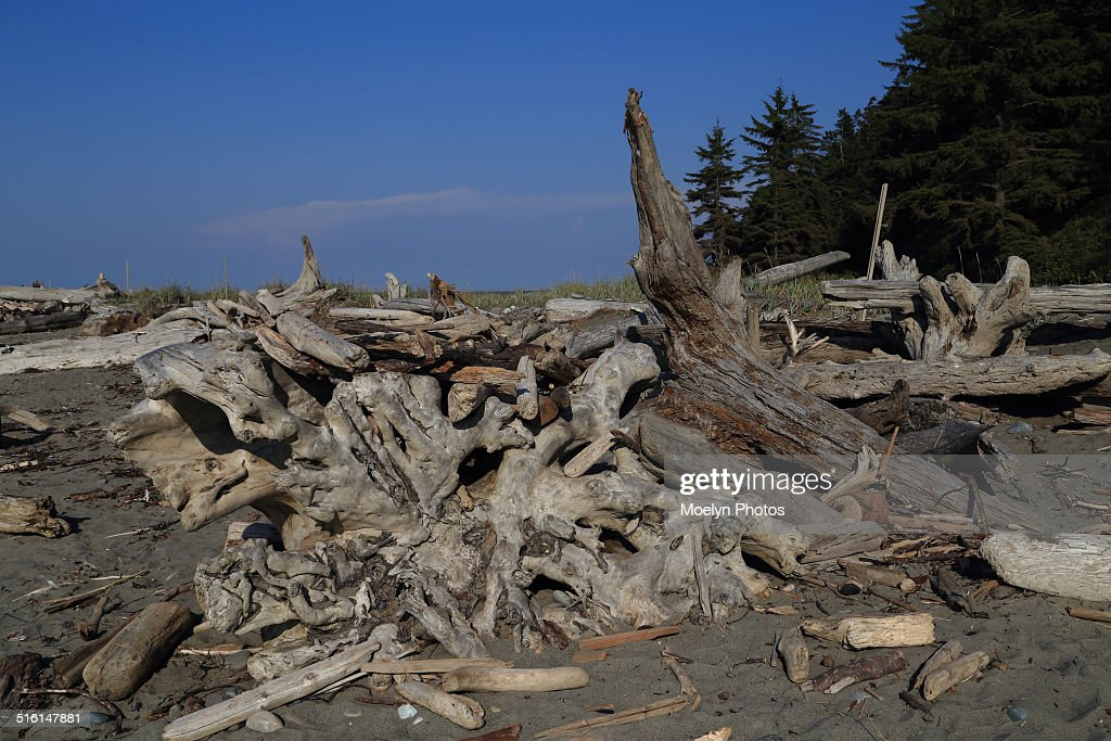 Natural Debris on Dungeness Spit