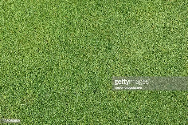 Natural golf grass background