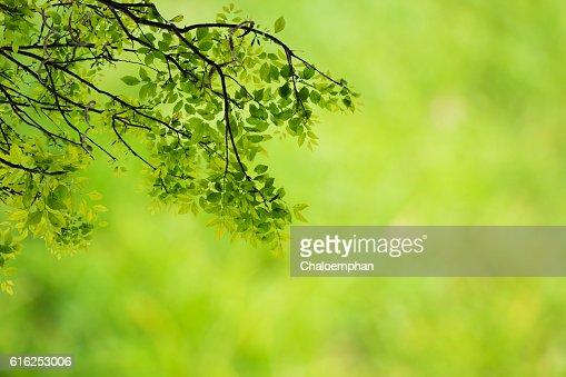 Fundo verde Natural : Foto de stock