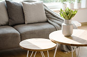 Close-up of tulips on wooden round table in natural grey living room interior with couch