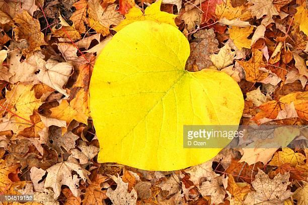 Coeur naturel forme