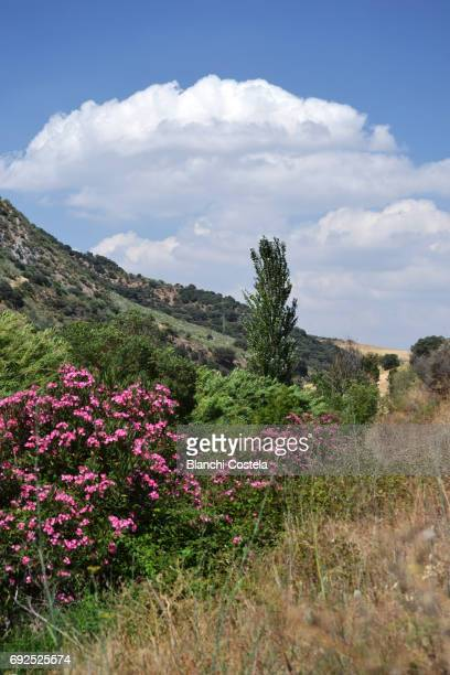 Natural landscape in the mountains in Medina Sidonia