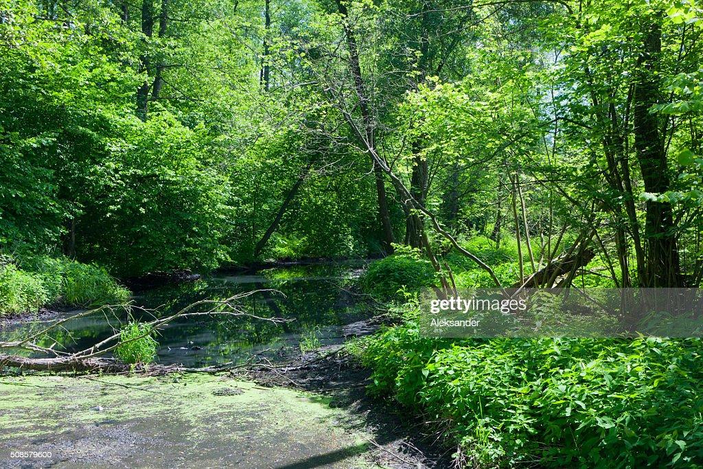 Natürliche Lesna Fluss im Sommer 12 : 00 Uhr : Stock-Foto