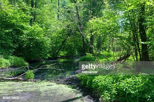 Naturel Lesna rivière en été de midi : Photo
