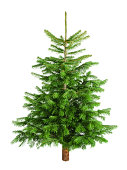Studio shot of a fresh gorgeous Christmas tree without ornaments, isolated on white