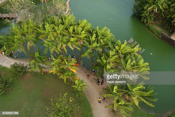Natural Park in Amazon,Brazil