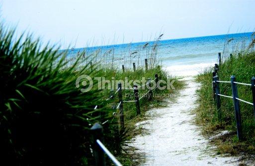 Natural pathway to beach : Stock Photo