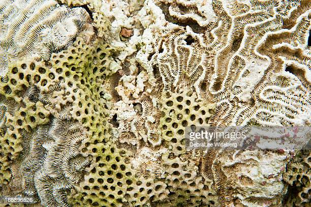 Natural Patterns of Coral
