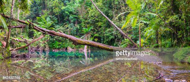 Natural Pool In The Daintree Rainforest National Park, Queensland, Australia