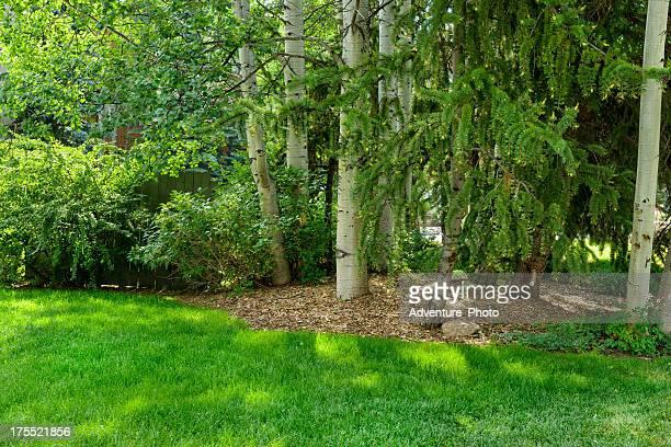 Natural Setting Amongst Aspen Trees