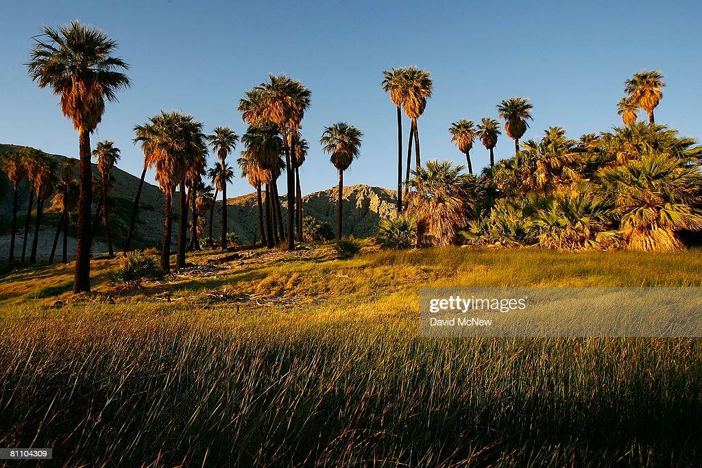 A natural spring-fed desert oasis is one of many supporting thousands of palm trees that line the San Andreas earthquake fault on May 15, 2008 northeast of Palm Springs, California. The fault system, which also includes the Banning and Mission Creek faults, pushes water to the surface of the Coachella Valley, creating important water sources for desert plants and wildlife. New calculations reveal a 99.7 percent chance that a magnitude 6.7 quake or larger will strike by 2037, according to the first ever statewide temblor forecast released by the scientists of the United States Geological (USGS), Southern California Earthquake Center and California Geological Survey last month. Scientists have particular concern for the people living along the southern portion of the 800-mile-long San Andreas Fault east of Los Angeles. This section of the fault has had very little slippage for more than 300 years and has built up immense pressure that could release an earthquake of historic proportions at any time. Such a quake could produce a sudden lateral movement of 23 to 32 feet and would be among the largest ever recorded. Experts have predicted that a quake of magnitude 7.6 or greater on the southern San Andreas would kill thousands of people and cause many billions of dollars in damages, dwarfing the 1994 Northridge disaster near Los Angeles that killed 72 people, injured more than 9,000 and caused $25 billion in damage.