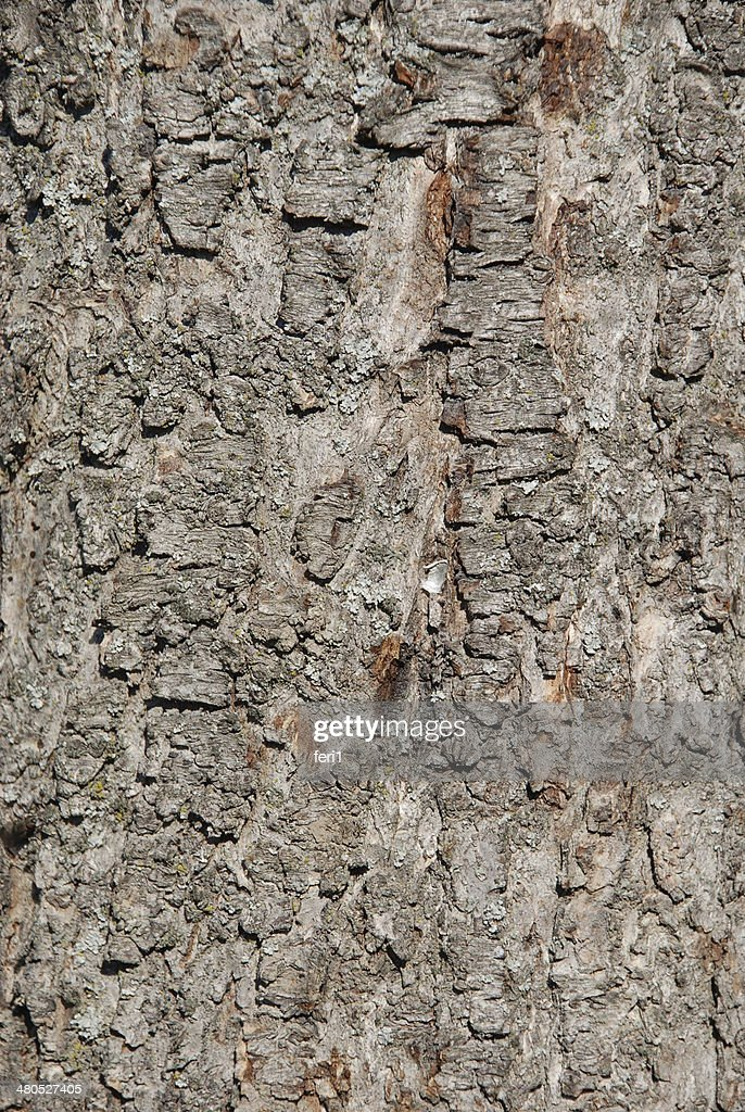 Natural Wooden background : Stockfoto