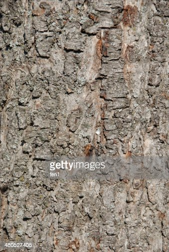 Natural Wooden background : Stock Photo