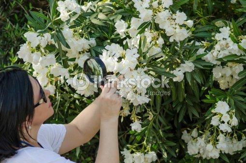 Naturalist looking the white oleander flowers stock photo thinkstock naturalist looking the white oleander flowers stock photo mightylinksfo