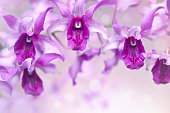 Nature background of purple orchid flowers in the garden during summer day with sunlight and blur bokeh background.