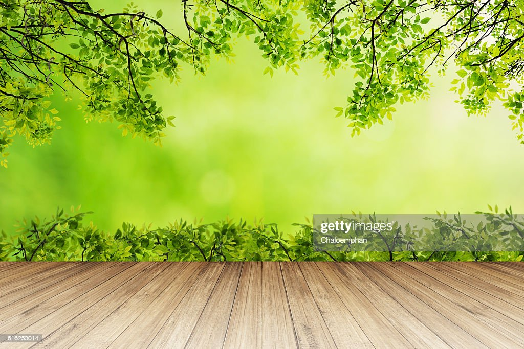 Nature background. : Stock Photo