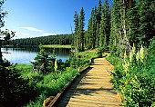 Maintained Trail around Mirror Lake, High Uintas Widerness, Utah