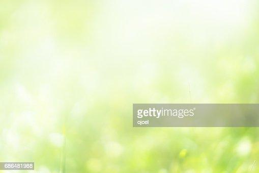 nature bokeh : Stock Photo