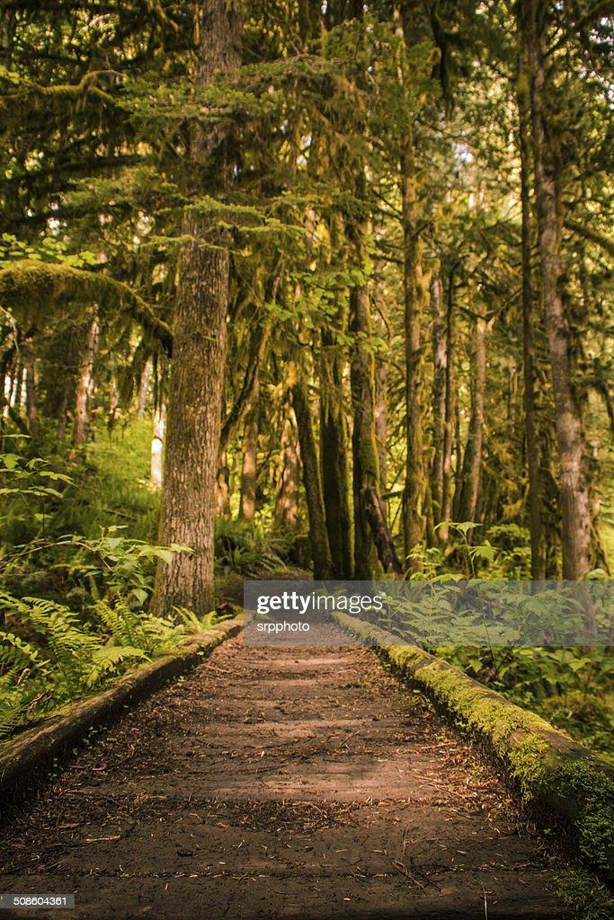 Caminho de Floresta natural caminhada : Foto de stock