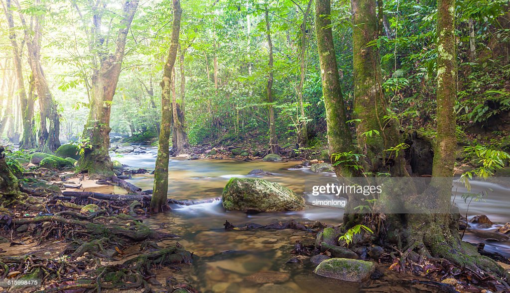 Nature forest in sarawak , Malaysia