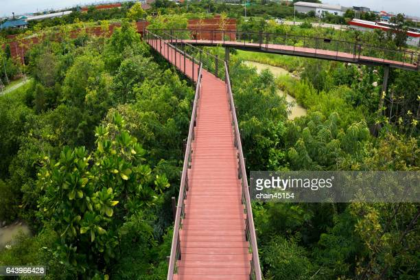 Nature forest walkway for relax and travel.