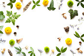 Frame with leaves, flowers and seeds on white background.
