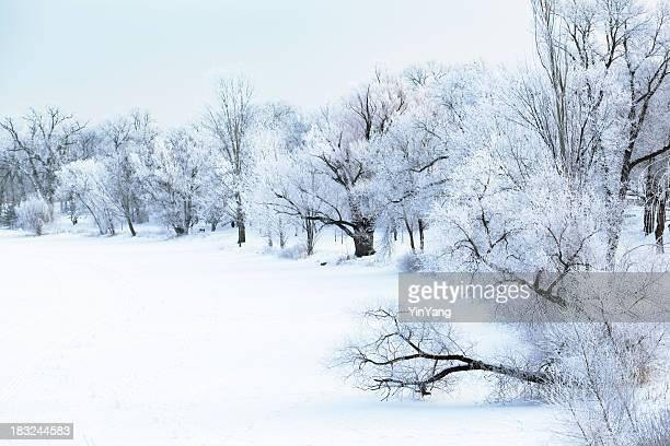 Hoar Frost forêt Nature paysage d'hiver des arbres gelés, bord de lac
