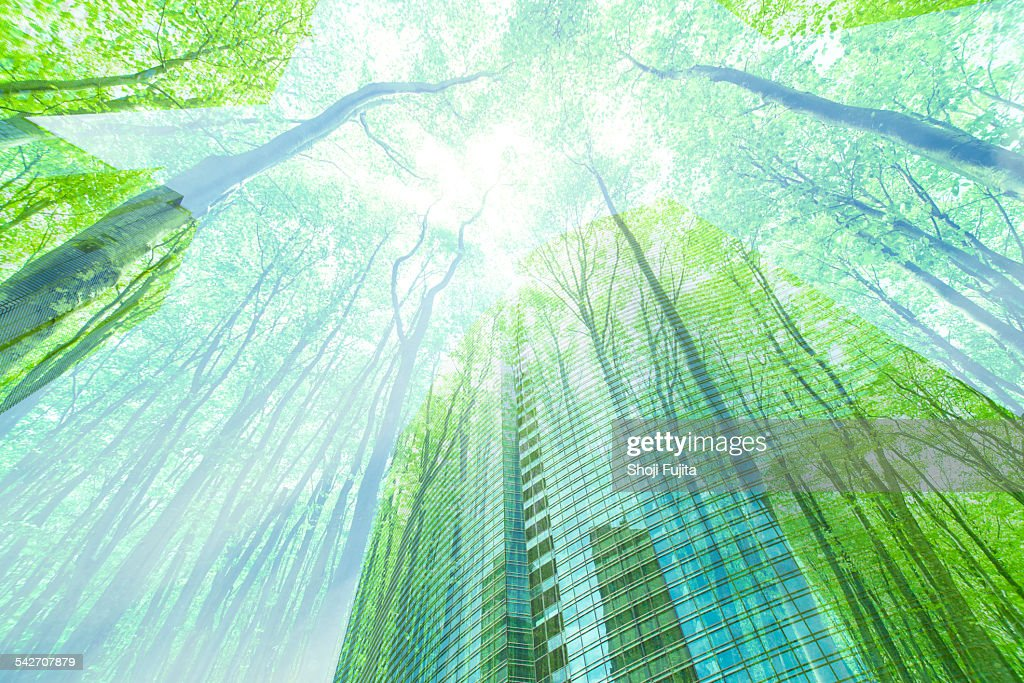 Nature in the city. : Stock Photo
