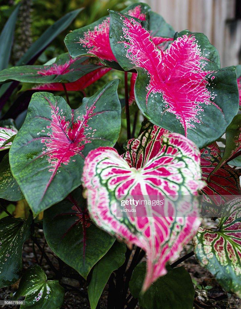 Nature Leaf : Stock Photo