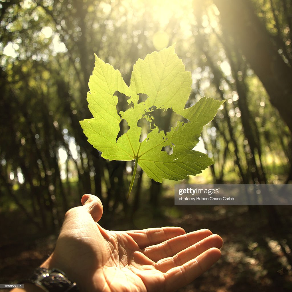 Nature loves us : Stock Photo