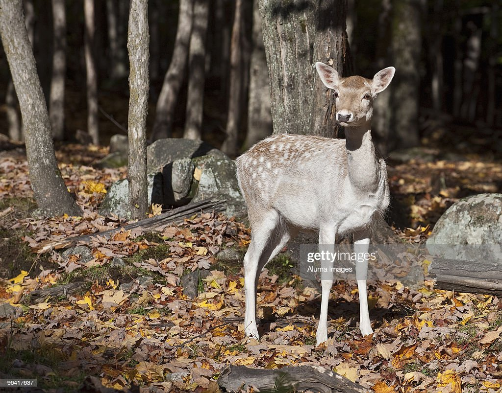 Nature : Stock Photo