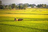 Nature reserve Van Long Wetland in Viet Nam