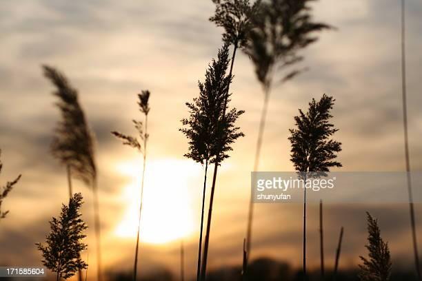 Nature: Mer au coucher du soleil