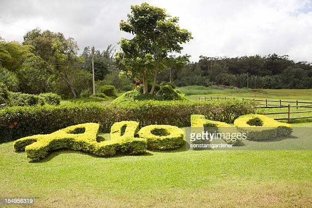 Nature Spells Out Hawaiian ALOHA