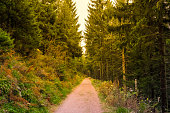 Nothing adventurous than the Nature Trail in Black Forest of Germany.
