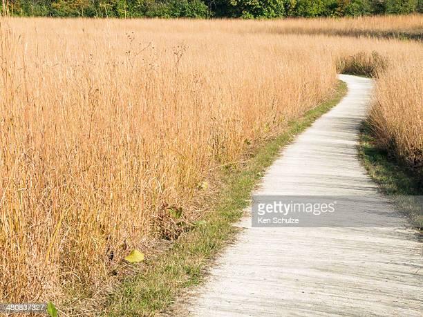 Nature trail through grass