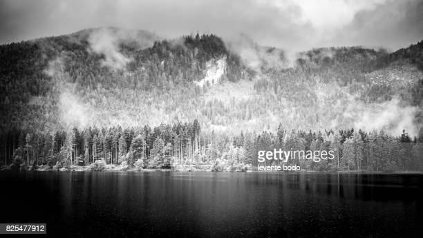 Nature tranquility. Moody mountain landscape with a pine trees. Black and white moody landscape.