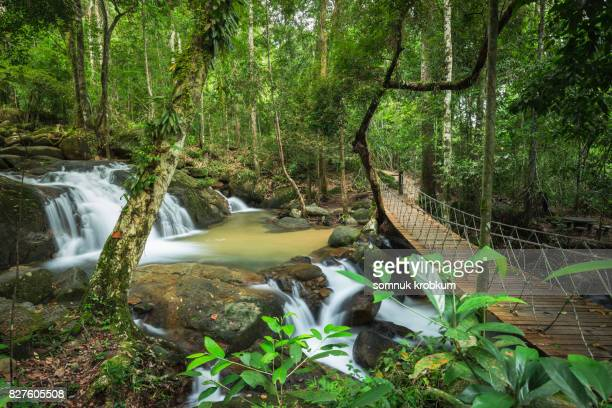 Nature waterfall in forest