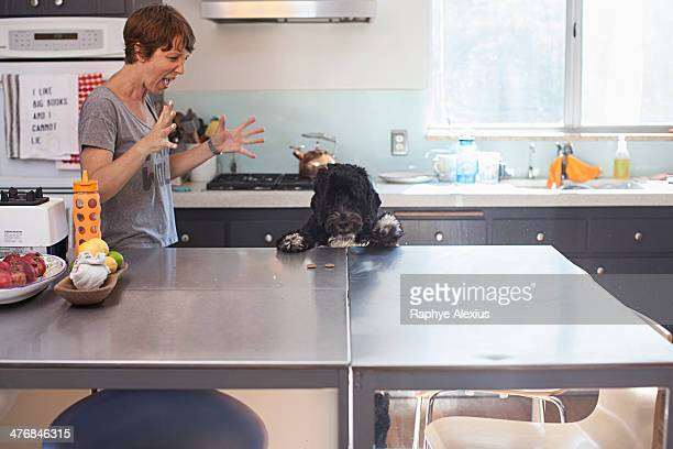 Naughty pet dog standing up at kitchen counter