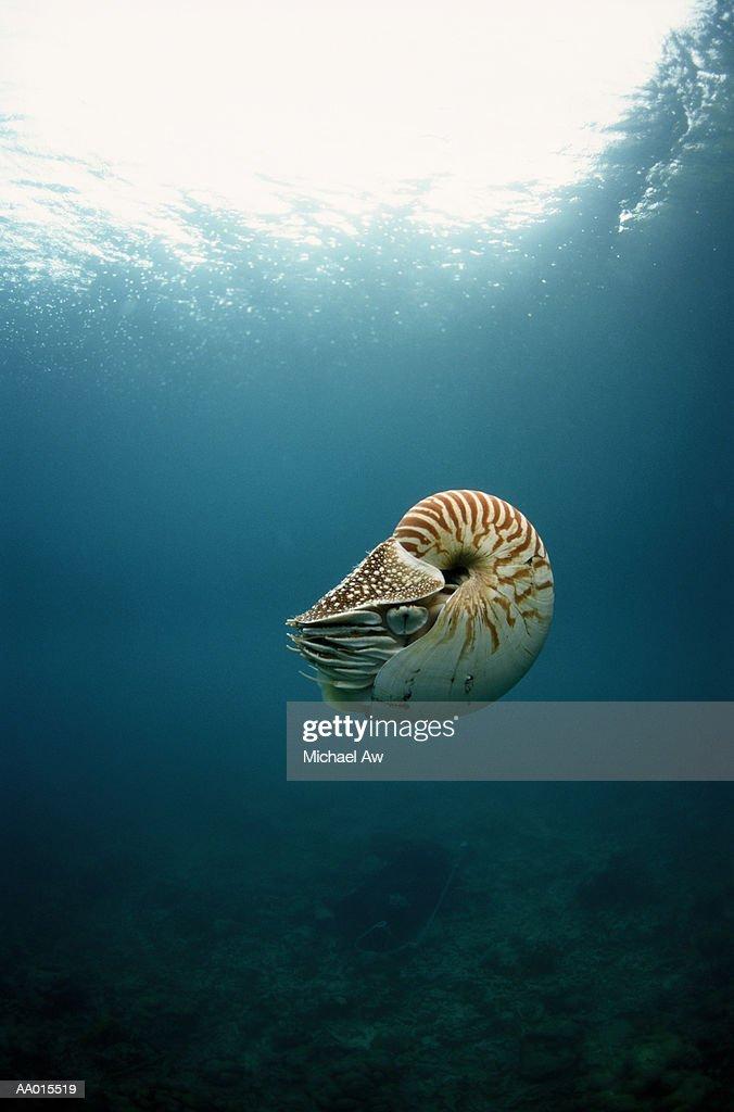 Nautilus Floating