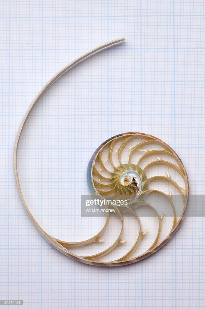 Nautilus shell on graph paper