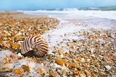 nautilus shell on peblle beach and sea waves near Bournemouth, UK. shallow dof