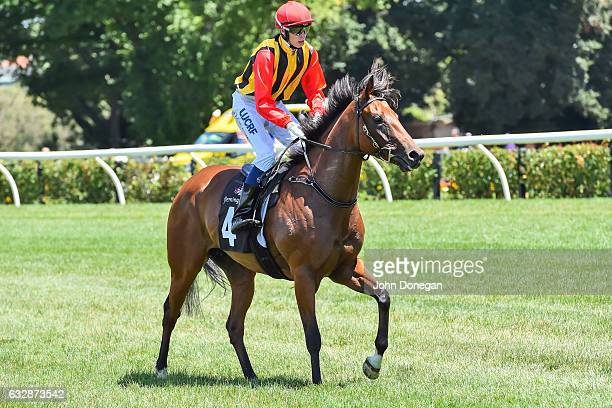 Navagio ridden by Michael Dee returns after winning the Doriemus Handicap at Flemington Racecourse on January 28 2017 in Flemington Australia
