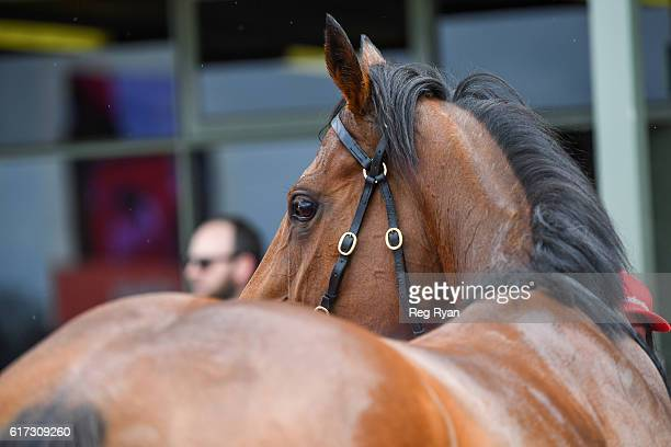 Navagio wins Subway Sale Maiden Plate at Sale Racecourse on October 23 2016 in Sale Australia