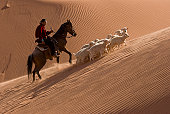 Navajo Indian on horseback herding sheep up a sand dune