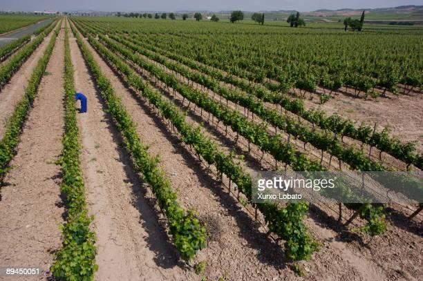 Navarre Winery Baron de Ley Mendavia